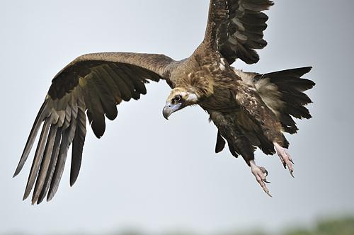 Aves de Extremadura Extremaduraespanaes